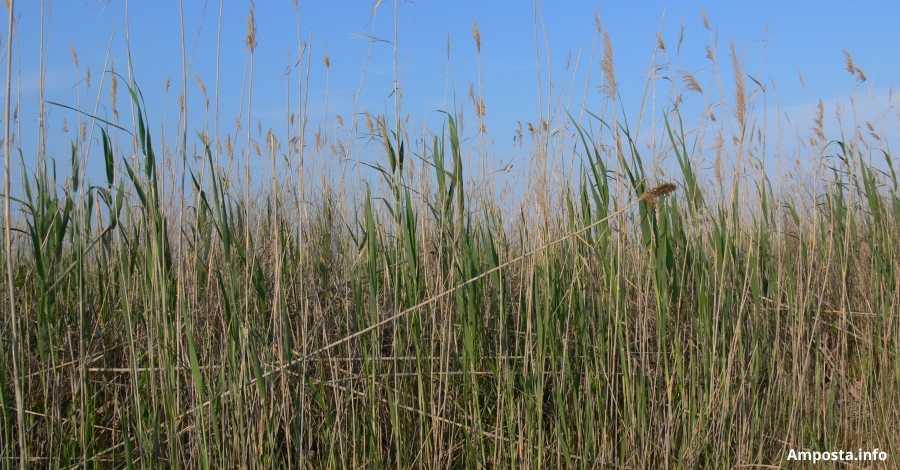 Crema controlada per reduir biomassa als Erms de la Tancada i als Ullals de Baltasar | Amposta.info