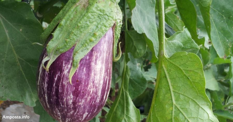 L'Escola Agrària d'Amposta organitza el curs «Obtenció tradicional de llavors hortícoles»