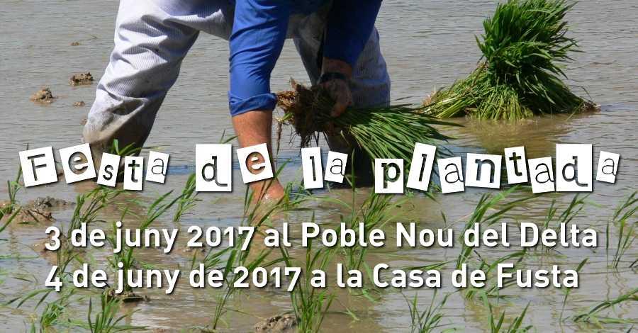 Festa de la plantada 2017 Poble Nou del Delta