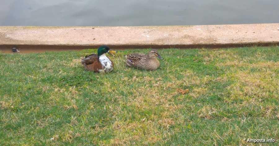 Les aus del Parc dels Xiribechs es traslladaran temporalment com a prevenció davant del brot de grip aviar