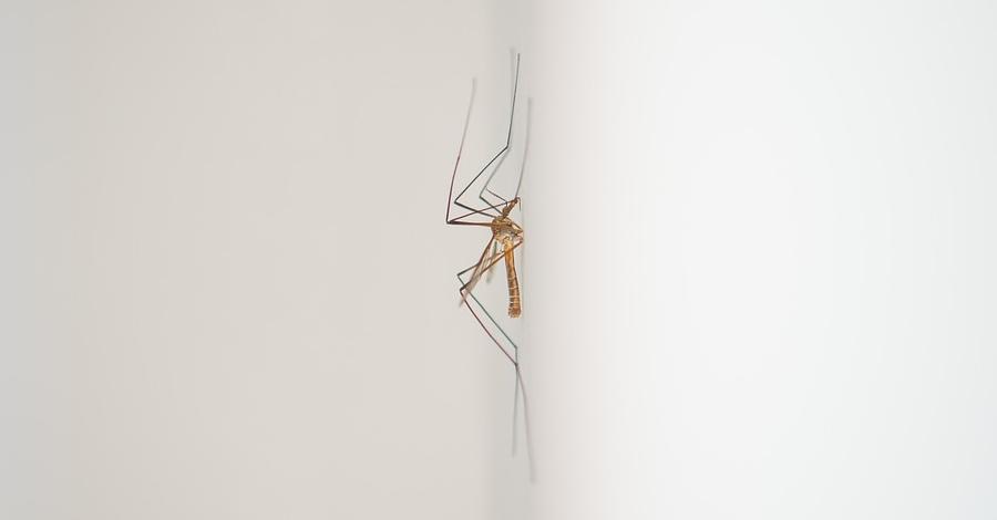 Aquest pròxim dilluns es farà el segon tractament contra les larves dels mosquits