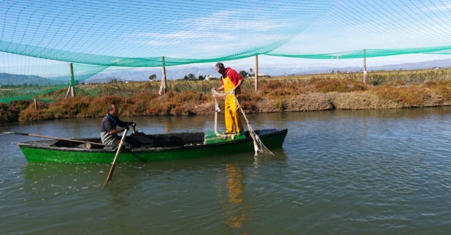 Visita a la Pesquera, visita a la Confraria de Pescadors de Sant Pere